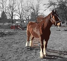 Landis Valley Horse and Red Wagon II by purplefoxphoto