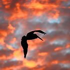 Australian Pelican, Silhouette by Tony Brown