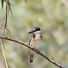 Sacred Kigfisher by EnviroKey
