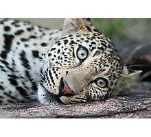 Leave me alone i am resting on my rock! Photographic Print