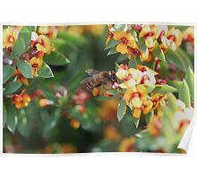 Pollen Legwarmers Poster