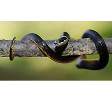 Little Snake! Photographic Print