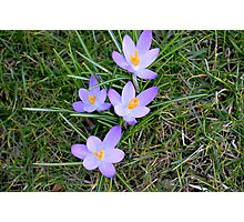 purple flower Photographic Print