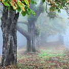 Autumn Brilliance - Mt Wilson NSW Australia by Bev Woodman