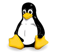 Linux Pinguin Photographic Print