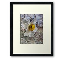 Daffodil in Grunge Framed Print