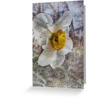 Daffodil in Grunge Greeting Card