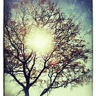The Sun For The Trees by Tracey Gurney