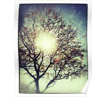 The Sun For The Trees Poster