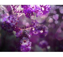 The Colour Purple Photographic Print