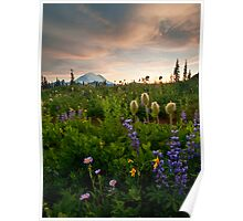Lupine Sunset Poster