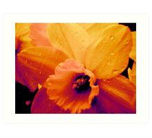 Rain on Daffodils Art Print