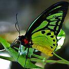 Butterfly XXXX by loiteke