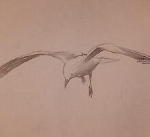 Flying Gull by Kayla001