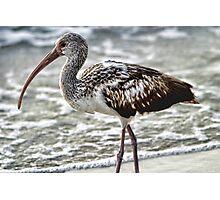 ☁ ☂  LIMPKIN BIRD NAPLES FLORIDA ☁ ☂   Photographic Print
