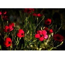 Field of Wildflowers  Photographic Print