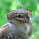 Cheeky Chipmunk by Darcy Overland