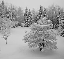 Snow in April, Alberta Canada by Jessica Karran