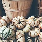 Little Autumn Pumpkins by Olivia Joy StClaire