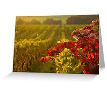 Golden light over Vineyard  Greeting Card