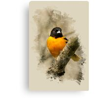 Baltimore Oriole Watercolor Art Canvas Print