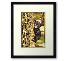 A Brand New Baby Black Bear Framed Print