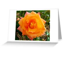 Multi Coloured Rose Greeting Card