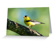 Blue Heart Goldfinch Art Greeting Card