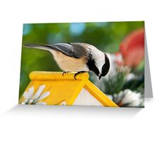 Spring Chickadee Bird Art Greeting Card