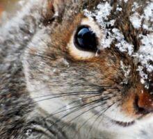 Wild Expedition Squirrel Art Sticker