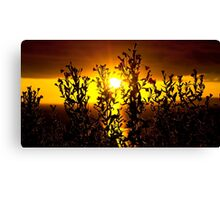 wild atlantic way sunset with flowers Canvas Print