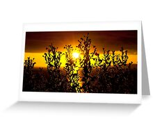 wild atlantic way sunset with flowers Greeting Card