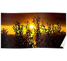 wild atlantic way sunset with flowers Poster