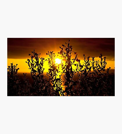 wild atlantic way sunset with flowers Photographic Print
