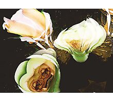 green roses surreal Photographic Print