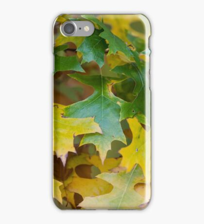 leaves on tree in autumn iPhone Case/Skin