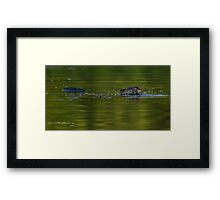 Beaver Eating on the Run Framed Print
