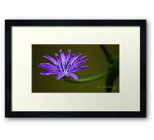 Blue Corn Flower Framed Print