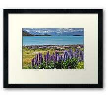 Lupins by the lake Framed Print