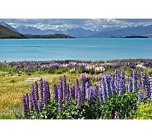 Lupins by the lake Photographic Print