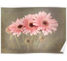 Pink Gerberas Poster