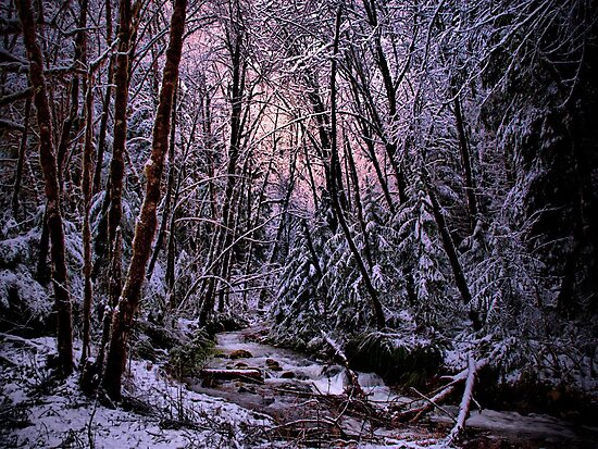 Woords Are Not Enough by Charles & Patricia   Harkins ~ Picture Oregon