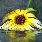 Yellow Gerbera Daisy Floiwer In Rain by PhotographyTK