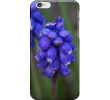 Grape Hyacinth (iPhone case) iPhone Case/Skin