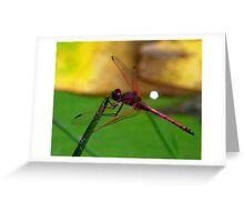 SA Dragonfly Greeting Card