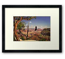 Grand Canyon Condour Framed Print