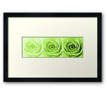 Lime Green Rose with Water Droplets Triptych Framed Print