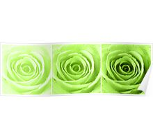 Lime Green Rose with Water Droplets Triptych Poster