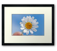 Daisy in the sky Framed Print
