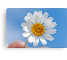 Daisy in the sky Canvas Print